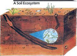 soil PROFILE1