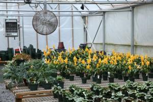 ventilation inside greenhouse