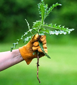 weeding-by-hand