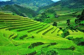Promoting terrace farming in hilly areas will result in a reduction of soil erosion.