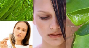 Uses-of-Fresh-Aloe-vera-Gel-for-Hair