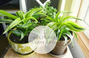 air-purifying-houseplants