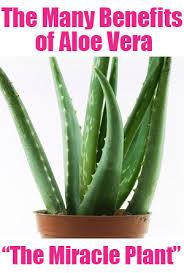beenifts of aloe vera