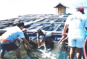 eco-friendly aqauculture