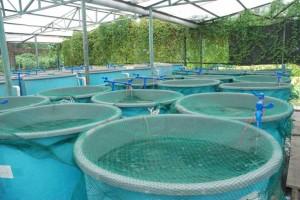 aquaculture-eco-clean-