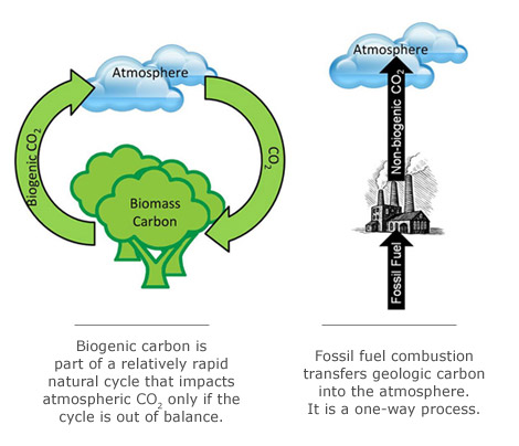 biomass cycle - photo #26