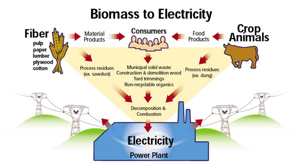 Biomass Energy: Reviving the traditional sources through Modern Technology